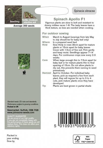 Spinat 'Apollo' F1 - Spinacia oleracea