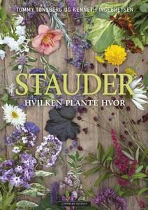 Bilde av Stauder - hvilken plante hvor