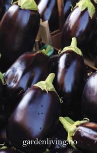 Bilde av Aubergine 'Bonica' F1 - Solanum melongena