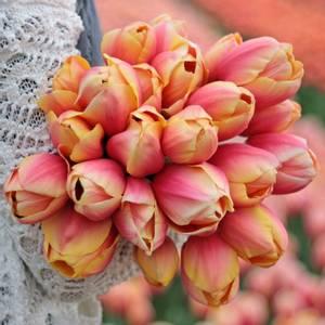 Bilde av Tulipan 'Marit', Darwinhybrid - 10 stk