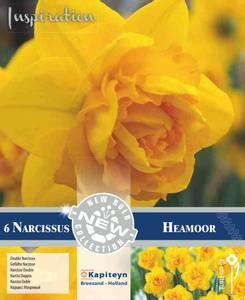 Bilde av Påskelilje 'Heamor' - Narcissus - 6 stk