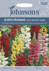 Bilde av Løvemunn 'Rust Resistant Mixed' - Antirrhinum majus