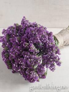 Bilde av Knerisp 'Seeker Purple' - Limonium sinuatum