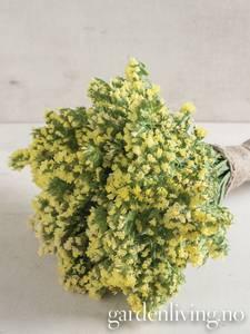 Bilde av Knerisp 'Seeker Lemon' - Limonium sinuatum