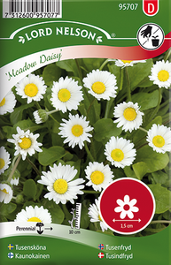 Bilde av Tusenfryd 'Meadow Daisy' - Bellis perennis