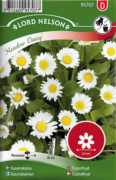 Tusenfryd 'Meadow Daisy' - Bellis perennis