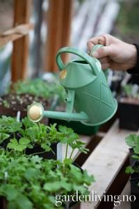 Bilde av Vannkanne, Haws mini heritage - plast, lysgrønn