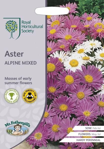 Alpeasters Mixed - Aster alpinus