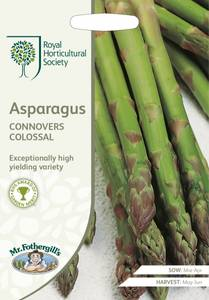 Bilde av Asparges 'Connover's Colossal' - Asparagus officinalis
