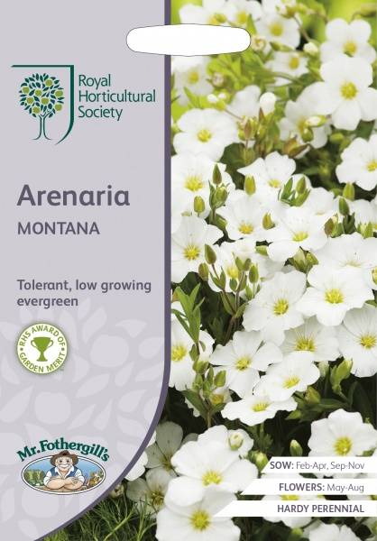Bergsandarve - Arenaria montana