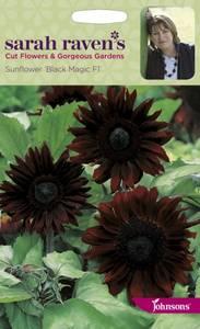 Bilde av Solsikke 'Black Magic' - Helianthus annuus