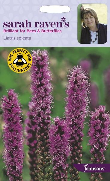 Akssøyleblomst - Liatris spicata
