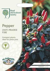 Bilde av Chilipepper 'Prairie Fire' - Capsicum annuum