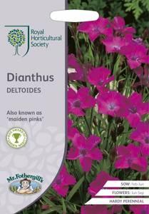 Bilde av Engnellik - Dianthus deltoides