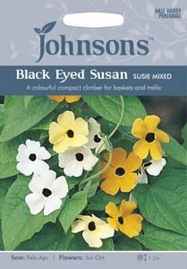 Bilde av Vingethunbergia 'Susie Mixed' - Thunbergia alata
