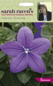 Bilde av Platycodon grandiflora 'Florist Blue'