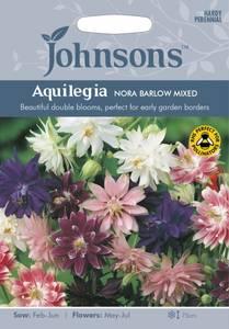Bilde av Akeleie 'Nora Barlow Mixed' - Aquilegia vulgaris