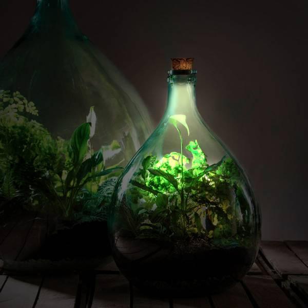 Kork til terrarium med solcelle og LED lys