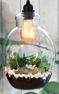 Bilde av Terrarium åpen pære, hengende med lys
