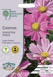 Bilde av Pyntekorg 'Sensation Pinkie' - Cosmos bipinnatus