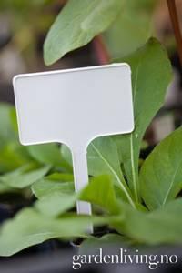 Bilde av Plastetiketter 10 pk -  T-etiketter