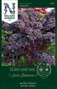 Bilde av Grønnkål 'Scarlet' - Brassica oleracea