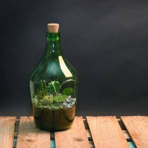 Bilde av Terrarium åpen, grønn flaske 3 liter