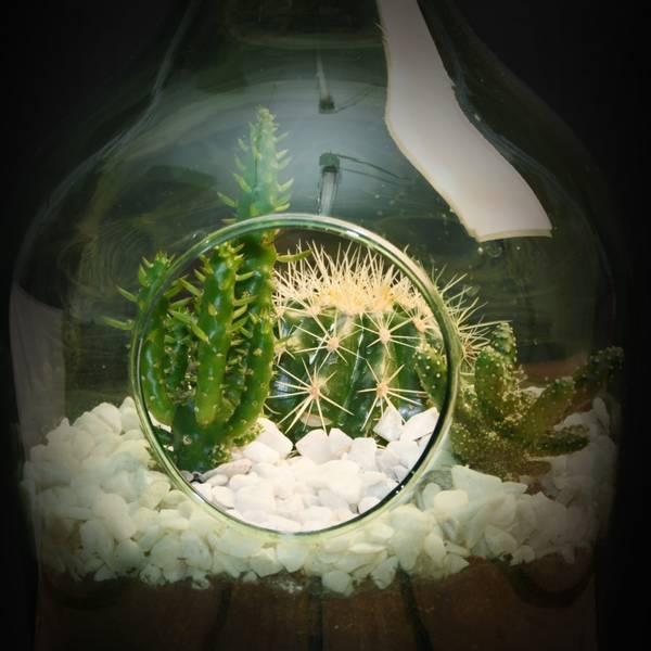 Terrarium åpen, grønn flaske 5 liter