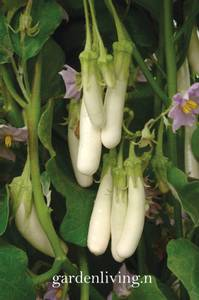 Bilde av Aubergine 'Gretel' F1 - Solanum melongena