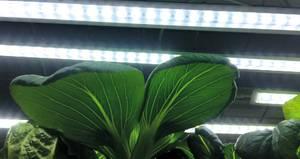 Bilde av LED-lyslist Small m/adapter 15W 39 cm