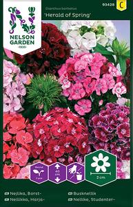 Bilde av Busknellik 'Herald of Spring' - Dianthus barbatus