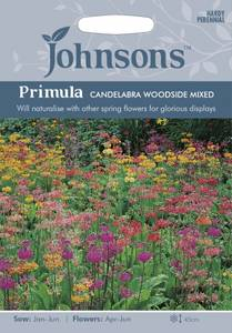 Bilde av Primula, krans- 'Candelabra Woodside mixed' - Primula x