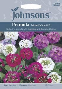 Bilde av Primula, kule- 'Drumstick Mixed' - Primula denticulata