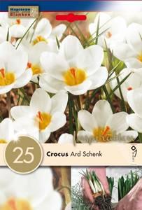 Bilde av Begerkrokus 'Ard Schenk' - Crocus chrysanthus - 25 stk