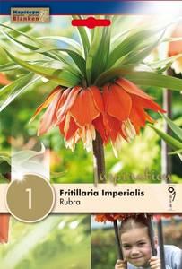 Bilde av Keiserkrone 'Rubra' - Fritillaria imperialis - 1 stk