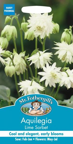 Akeleie 'Lime Sorbet' -  Aquilegia vulgaris