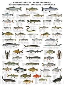 Bilde av Plansje, ferskvannsfisker