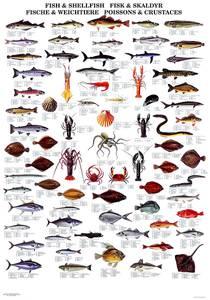Bilde av Plansje, fisk og skalldyr