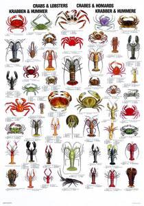 Bilde av Plansje, krabbe og hummer