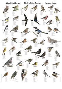 Bilde av Plansje, hagens fugler