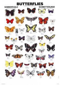 Bilde av Plansje, sommerfugler