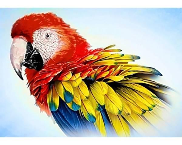 Papegøye 27x38cm