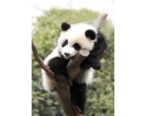 Bilde av Panda kit 27x38cm
