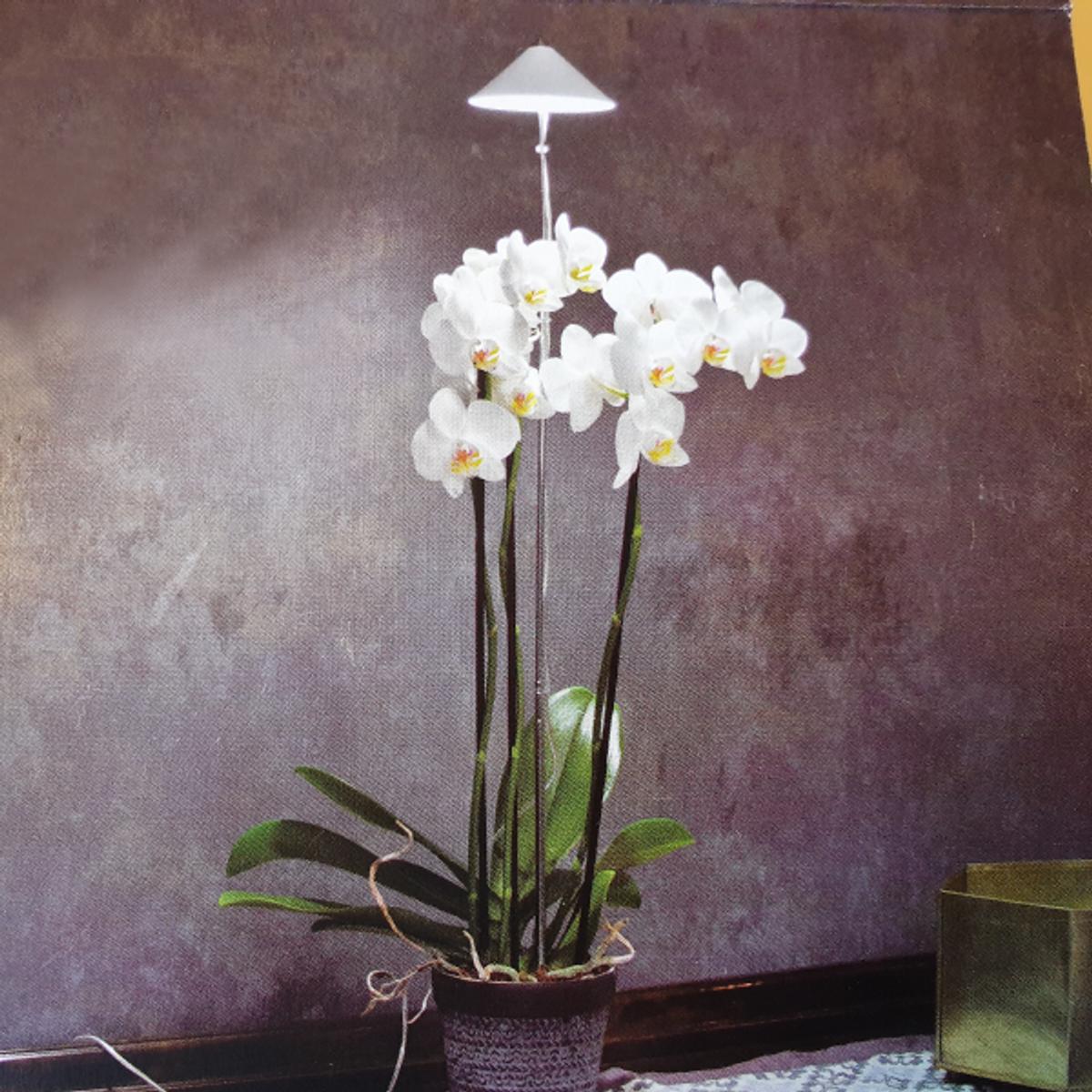 Sunlite Orkidelys Hvit 10 W