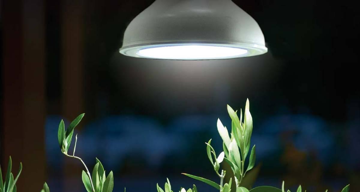 Plantelys LED-pære 18 W E27-sokkel