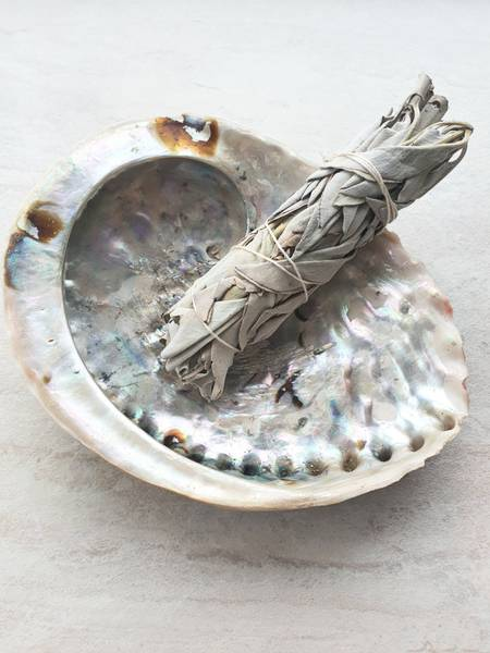 Bilde av Abalone Jumbo skjell 13-18 cm
