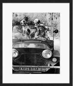 Bilde av Birgitte B and Dog (60x50)