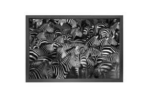 Bilde av Zebra - Lerret (150x90)