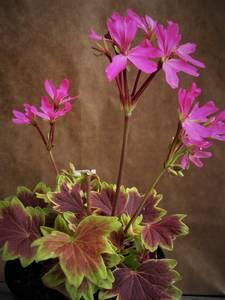 Bilde av Lotus Land