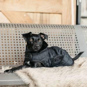 Bilde av Kentucky Hundedekken